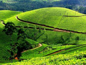 Munnar Tour Package from Bangalore